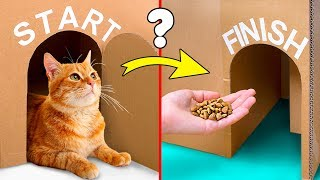Can Your Cat Find The Exit? Let's Build A Giant Labyrinth From Cardboard!