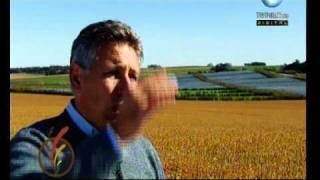 Desde la tierra: cultivo de Mango y Kiwi - 28-02-11 (3 de 4)