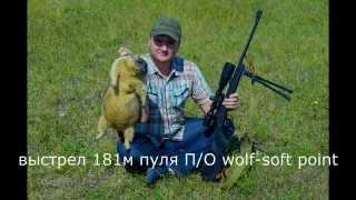 Охота на сурка байбака