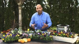Choosing Fall Flowers For Container Gardening & Window Boxes