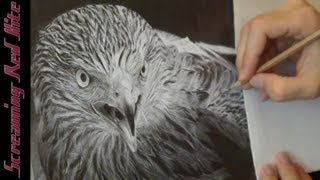 Screaming Red Kite - Drawing ᴴᴰ