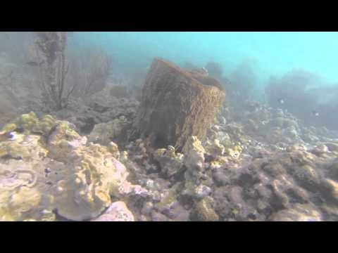 coral reef st.lucia