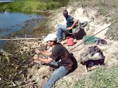 Pescaria de tilapia youtube for Construccion de estanques para tilapia