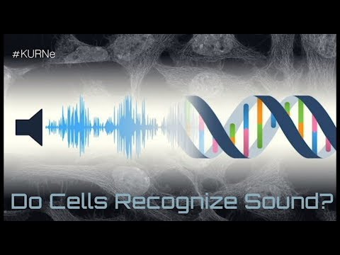 KURNe #1, Do Cells Recognize Sound?