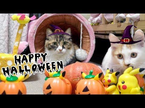 Happy Halloween!!万圣节南瓜亲子猫咪料理,大奶猫吃到直打嗝