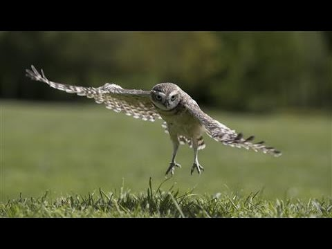 Bio Inspired Design Tapping The Silent Flight Of Owls
