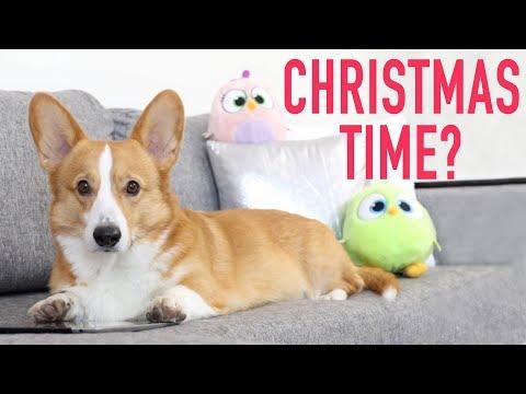 CHRISTMAS PANIC! - Topi the Corgi