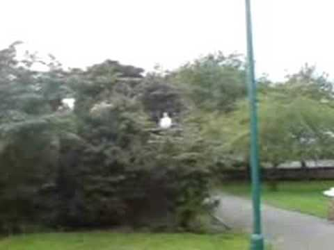 ben s jumpin off roof ann over a bush