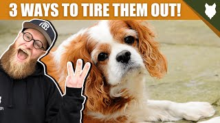 3 Tips To Tire Out Your SPANIEL Puppy