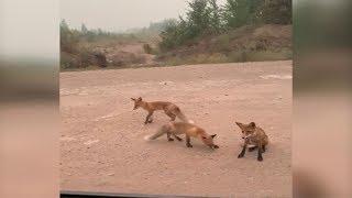 Животные бегут из горящего леса в Иркутской области