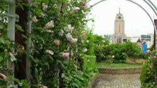 薔薇のアーチ。 鐘の音、 風の音で聞きづらくて済みません。