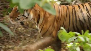 """""""The Queen of Taru"""" - Offical Trailer HD for 2019 WCFF"""