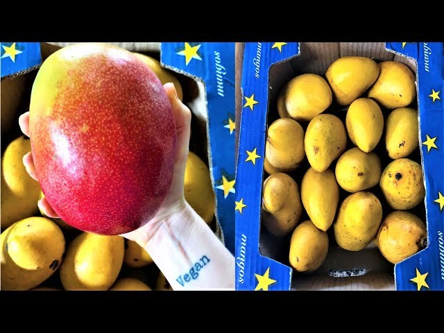 Mango Island - Day 1 of only eating mangoes