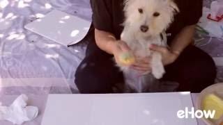 Video Daisy the Dog Makes Paw Print Art download MP3, 3GP, MP4, WEBM, AVI, FLV Agustus 2018