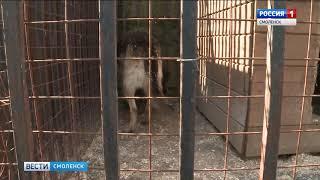В Смоленске становится меньше бездомных собак и непривитых кошек