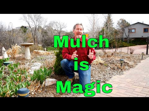 Understanding Mulch  Magic in the Garden