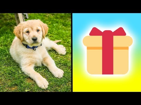 🎁  Opening Fan Mail with Family & Their New Puppy!