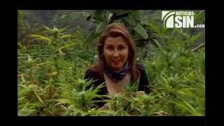 Ciudad colombiana donde se cultiva marihuana en grandes cantidades