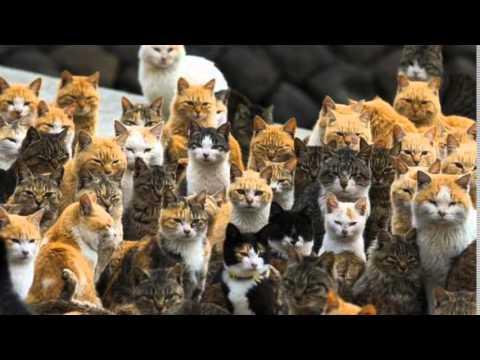 Too Many Cats Youtube