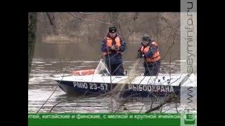 На курских реках ловят браконьеров(Они ловят браконьеров на живца. 82 года назад в нашей стране появилась служба рыбоохраны. Защита водных ресу..., 2016-04-08T08:36:50.000Z)
