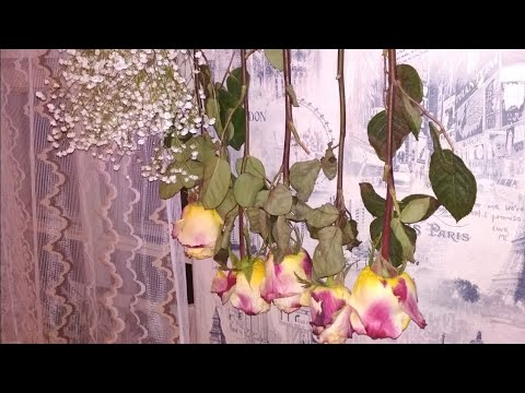 Как засушить розу в домашних условиях