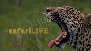 safariLIVE - Sunrise Safari - Jan. 16 2018 thumbnail