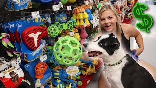 buying-my-dog-everything-he-touches-no-budget-challenge
