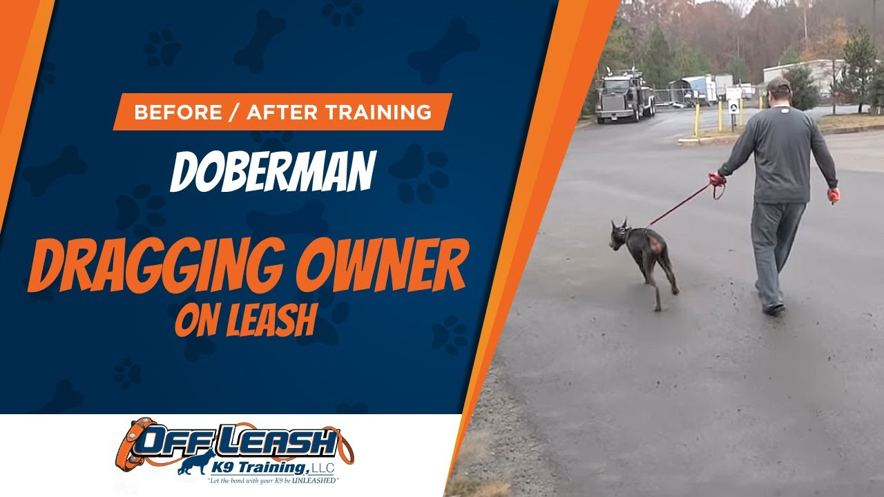 Doberman Dragging Owner On Leash! Before/After Video! Best Dog Trainers,  Northern Va