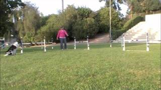Alphabet Drills - X: Agility Dog Training