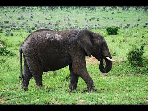 Holiday in Kenya | Masai Mara Safari | The big 5