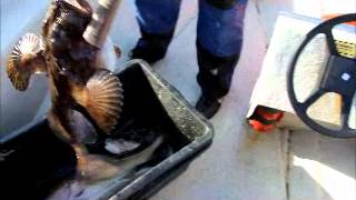 норвегия морской черт