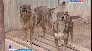 Атака клещей на приют для животных