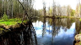 deep forest trip