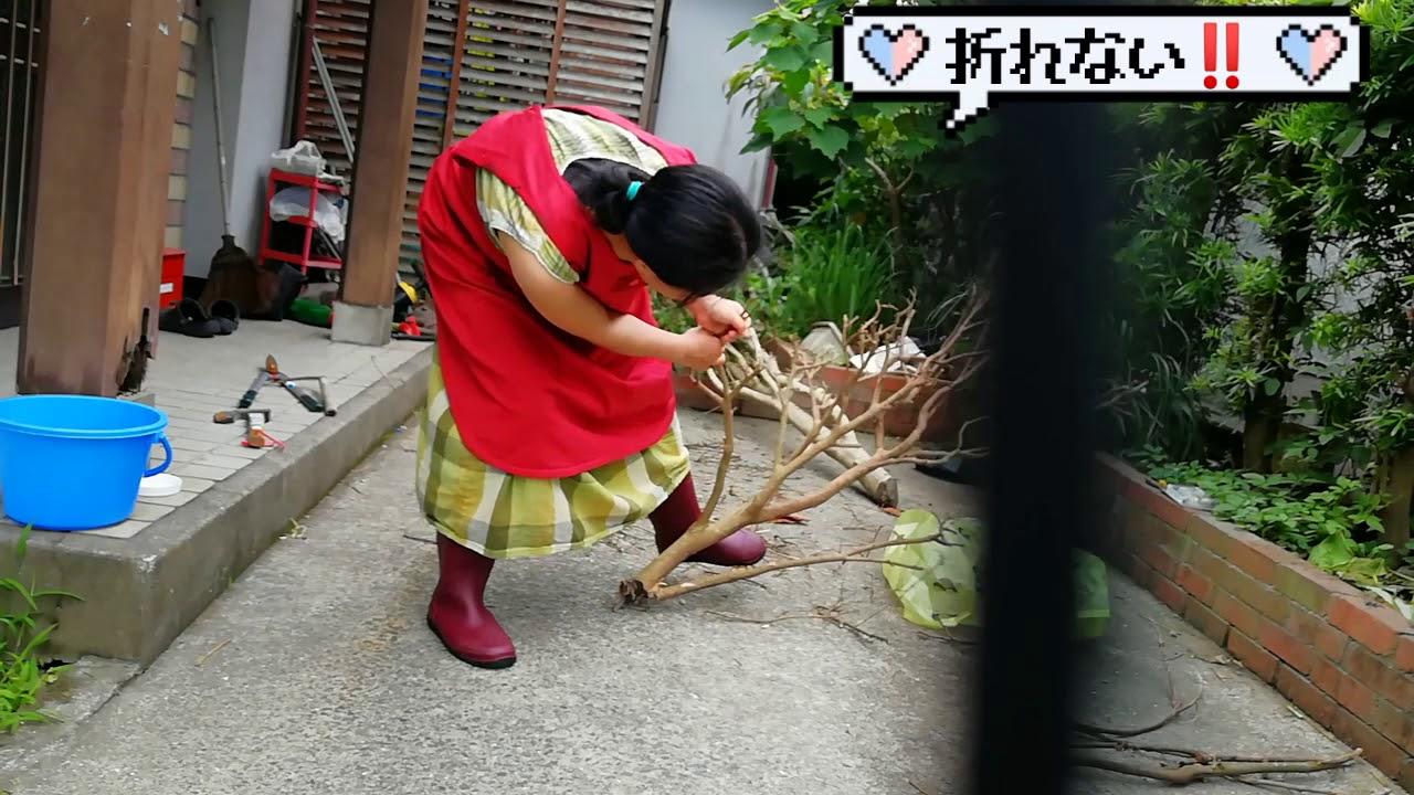 nachanja mitiアフリカンママがひたすら作業する動画です
