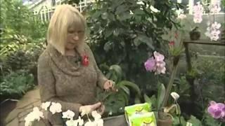 Tallinna Botaanikaaed: orhideede hooldamine (Kodusaade, 10.12.2011)