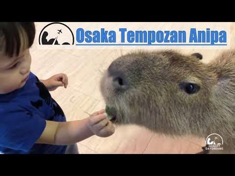 Osaka Tempozan Marketplace & Anipa Petting Zoo | 2018 Best of Osaka for Kids [4K]