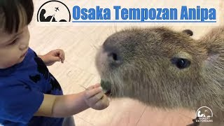 Osaka Tempozan Marketplace & Anipa Petting Zoo | 2018 Best of Osaka for Kids [4K]