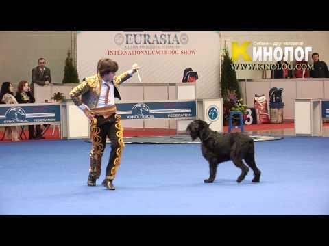 12 - Dog Show 'Eurasia  2012 / Russia / Moscow'. Freestyle.