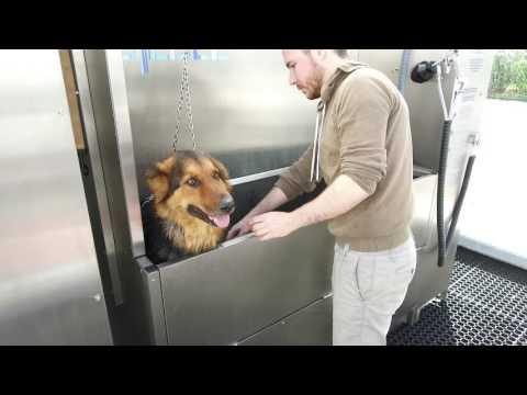 Le Dog Wash au Leclerc de Pont l'Abbé