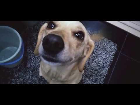 Моя собака не любит мыться