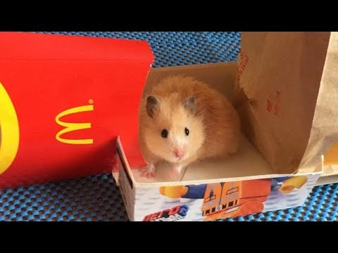 McDonalds Maze  for Hamsters 🍟 Obstacle Course from McDonald's packages