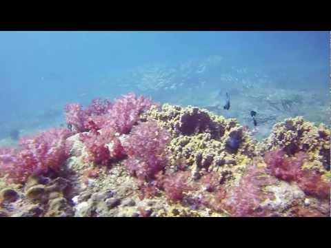 Miri Malaysia - GoPro Hero3 Black - Diving