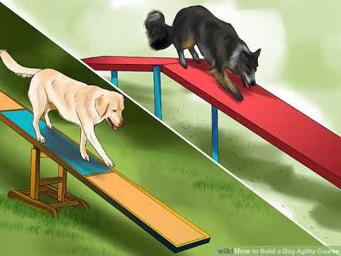Build A Dog Agility Course