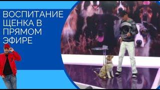 Воспитание щенка в прямом эфире (за кадром)