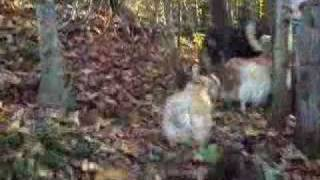 Movie_walk-the-trails_combined-front-back-view_v1_0001.wmv