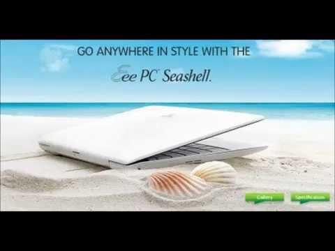 Seashell  Allstars