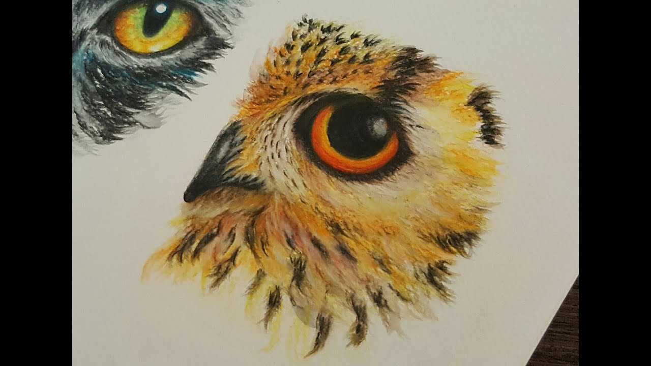 Drawing An Owl Eye With Watercolor Pencils How To Draw Animal