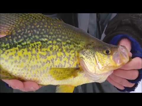 Ice Fishing Crappie Secrets