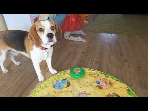 Whack-a-Mole *Cat and Dog Style*