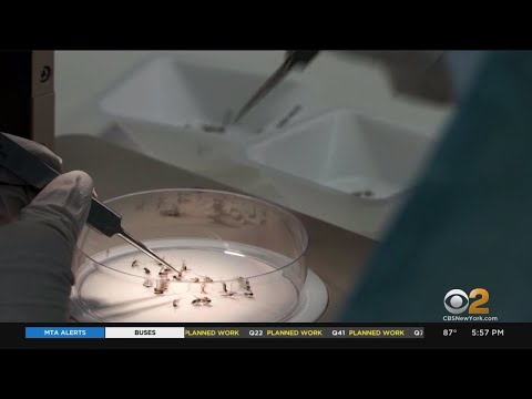 CDC Discovers New Ingredient To Repel Insects
